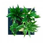 cadre-vegetal-depolluant